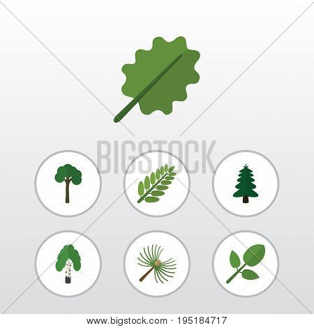 Flat Icon Bio Set Of Alder, Leaves, Evergreen And Other Vector Objects. Also Includes Tree, Park, Leaves Elements.
