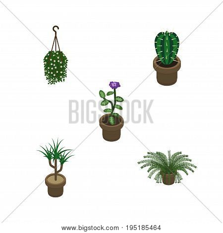 Isometric Houseplant Set Of Houseplant, Flower, Plant And Other Vector Objects. Also Includes Cactus, Pot, Botany Elements.