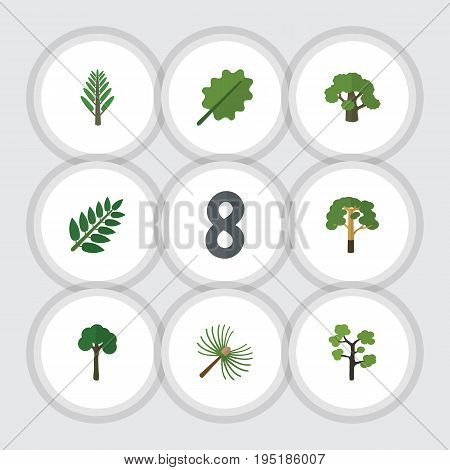 Flat Icon Nature Set Of Rosemary, Jungle, Evergreen And Other Vector Objects. Also Includes Willow, Tree, Timber Elements.