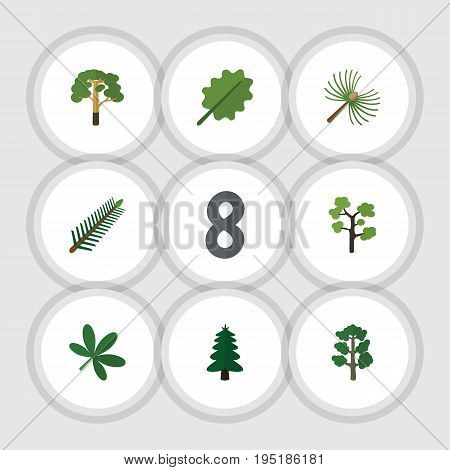 Flat Icon Ecology Set Of Rosemary, Forest, Park And Other Vector Objects. Also Includes Park, Leaves, Leaf Elements.