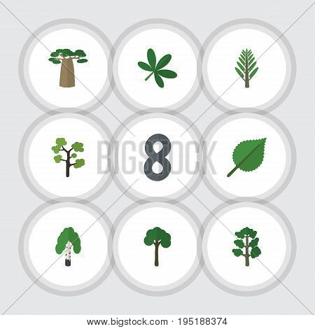 Flat Icon Natural Set Of Maple, Forest, Jungle And Other Vector Objects. Also Includes Birch, Willow, Alder Elements.