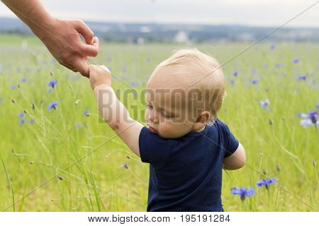 Follow me. Son following father in field of cornflowers.