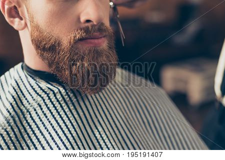 Close Up Cropped Photo Of A Styling Of A Red Beard. So Trendy And Stylish! Advertising And Barber Sh
