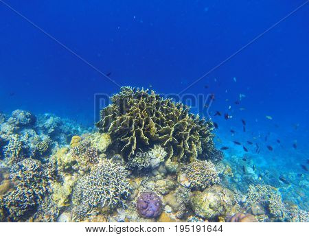 Underwater landscape with coral reef. Diverse coral ecosystem. Blue sea water view. Tropical fish in wild nature. Sea bottom perspective. Natural aquarium in tropical lagoon. Exotic sea snorkeling