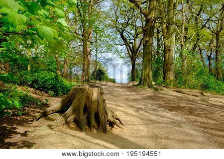 Tree trunk by a dirt path in Wimbledon Common, England
