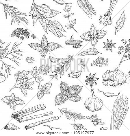 Seamless pattern with hand drawn culinary herbs and spices, vector illustration