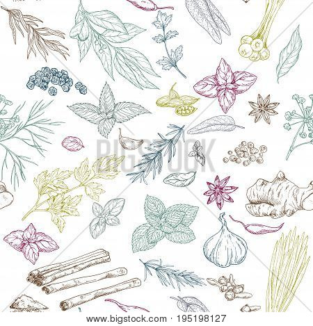 Seamless pattern with colored hand drawn culinary herbs and spices, vector illustration
