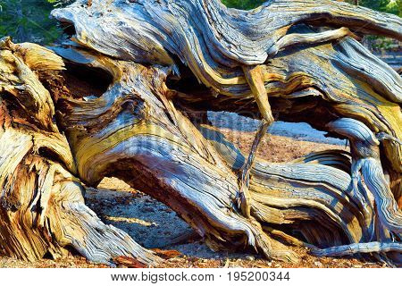 Twisting pine wood with abstract patterns and textures