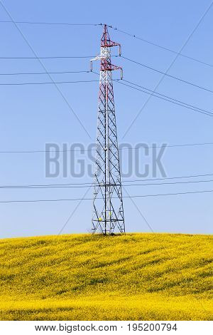 A fully flowered meadow of yellow flowers, an electricity pylon and blue sky. Scenario between hills and plains in the spring. Concept of union between man and nature.