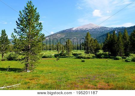 Lush green alpine meadow surrounded by a pine forest with a mountain peak beyond taken at Horseshoe Meadow in the Sierra Nevada Mountains, CA