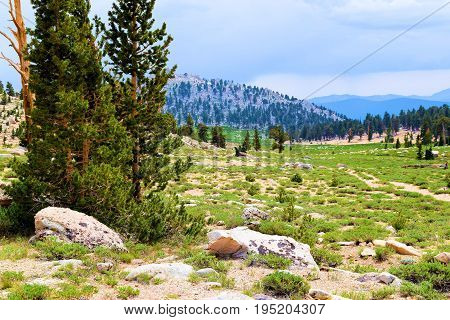 Lush green meadow surrounded by Pine Trees taken at an alpine meadow in the Sierra Nevada Mountains, CA