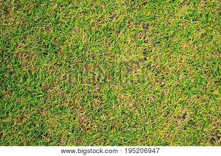 Green grass photo background. Green grass soccer field background. Spring banner of fresh grass. Short grass image for backdrop or seasonal card. Green land texture. Playground area for summer sport