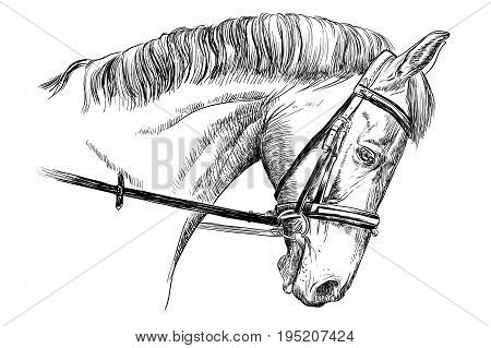 Isolated horse head with bridle in black color vector hand drawing illustration on white background