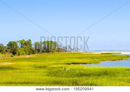 Fields of green grass and live trees beside the ocean front