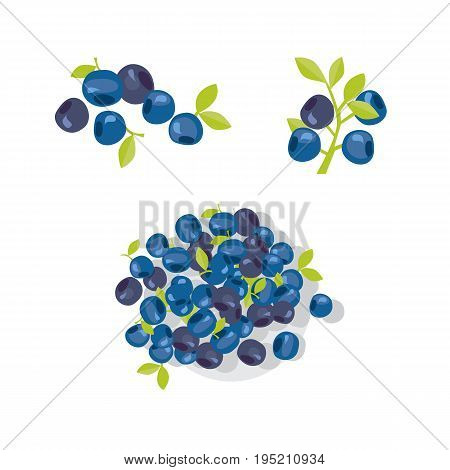 berries vector illustration. blueberry, bilberry image. abstract decorative vintage elements. branch on forest huckleberry