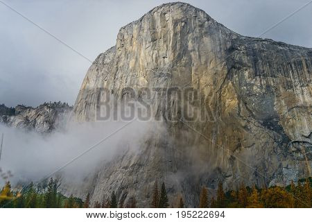 El Capitan Meadow With Tall Yellow Grass