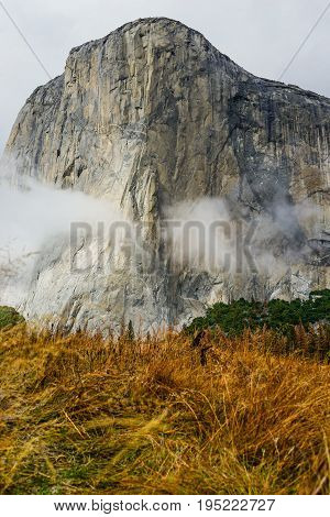 El Capitan Meadow with tall yellow grass at Yosemite National Park