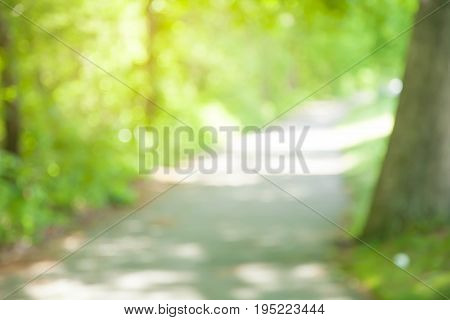 beautiful green forest with walkway in the woods and sunlight in summer at boston.