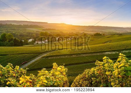 Scenic landscape in the Champagne at sunrise time Vineyards in the Montagne de Reims France