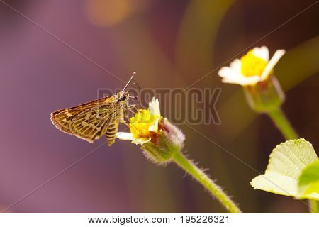 Butterfly catching grass flower. Beautiful nature. Love emotion.