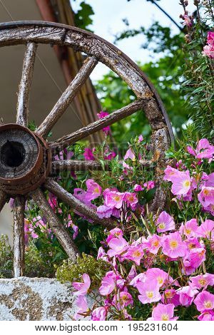 Pink flowers bush and old wooden wheel summer vacation post card