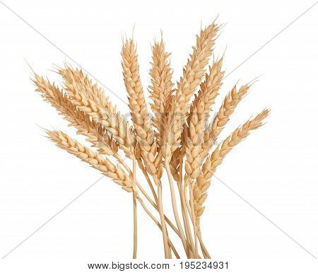 Sheaf of yellow wheat spikelets on the white background