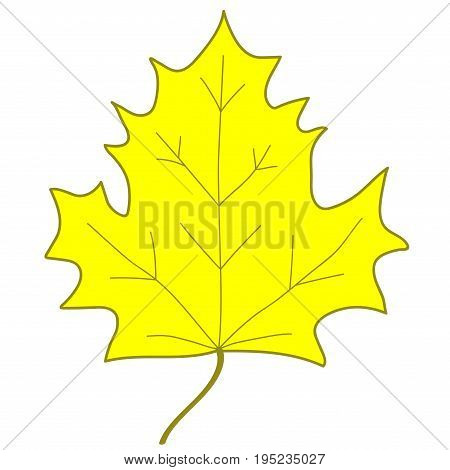 Maple leaf sign. Yellow plane icon isolated on white background. Color nature logo. Botany autumn wood or garden symbol. Ecology flat silhouette. Foliage mark. Stock vector illustration