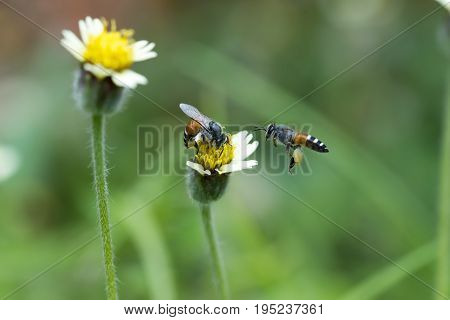 Two Bees With Grass Flowers.