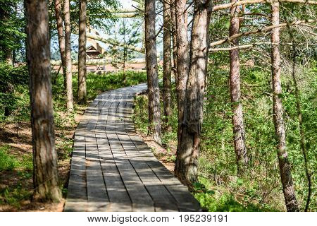 Wooden Footpath In The Bog