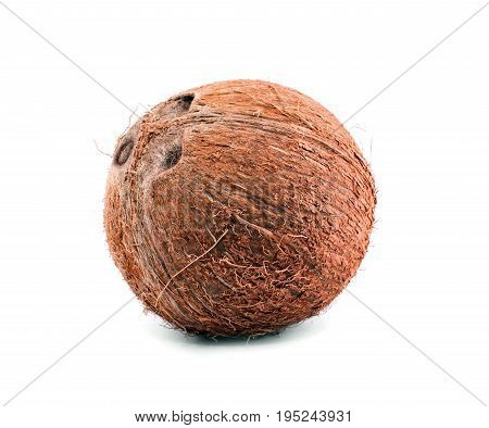 A whole, delicious coconut. Close fresh coconut, isolated on a white background. Tasty tropical coconut. Brown natural tropical and fresh fruit coconut.