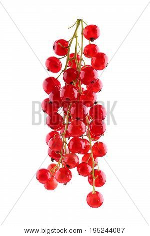 Juicy and healthy bright red currant. Ripe, tasty, fruits and berries. Mature, juicy, raw, fresh, tasty, healthy, nutritious concept. Berries for vegetarian food. Delicious red currant.