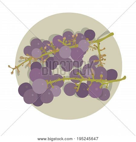 two bunches of grapes on a plate purple grape isolated vector illustration