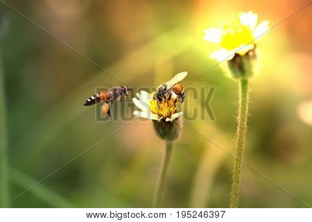 Two bees with grass flowers. Beautiful nature.