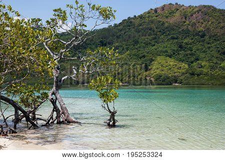 Mangroves of El Nido Bacuit bay Palawan island Palawan province Philippines