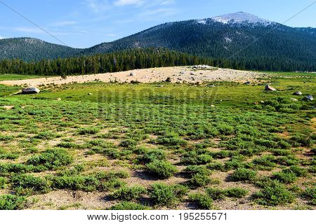 Lush green meadow surrounded by a pine forest and mountain peaks taken at Horseshoe Meadow in the Sierra Nevada Mountains, CA