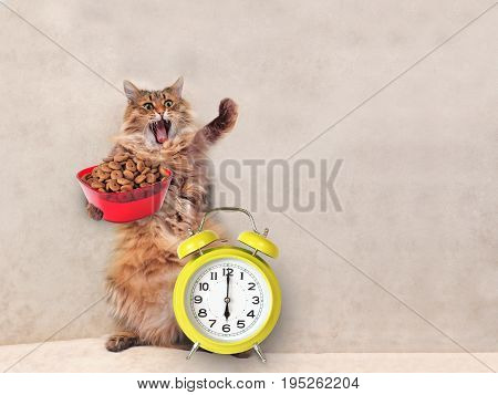 The Big Shaggy Cat Is Very Funny Standing.clock , Feed 5