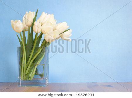tulip arrangement - blue background