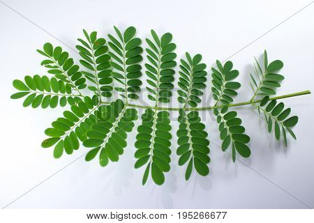 Leaf Of Red Flamboyant Flower Isolated
