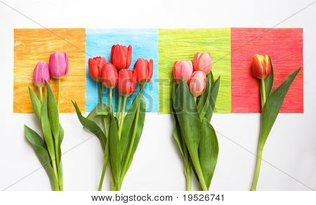bunches of tulips on colorful squares