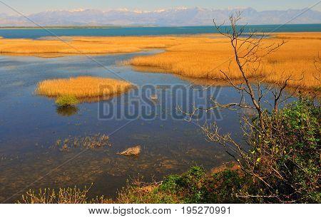 Wild landscape of Skadar lake in Montenegro