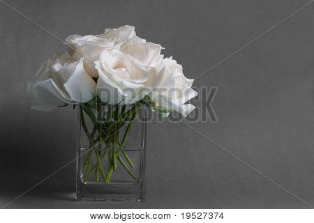 white roses in vase - moody grey background & room for copy