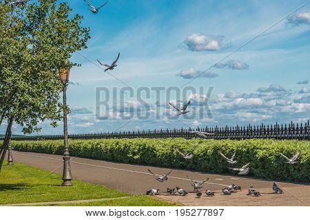 Purebred pigeons on a stone platform in Mezhegorie near Kiev.