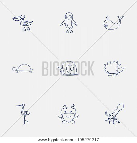 Set Of 9 Editable Animal Icons. Includes Symbols Such As Polar Bird, Tortoise, Shadoof And More. Can Be Used For Web, Mobile, UI And Infographic Design.