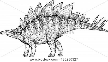 Stegosaurus illustration, drawing, engraving, ink, line art