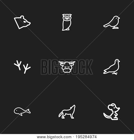 Set Of 9 Editable Zoology Icons. Includes Symbols Such As Wolf, Cachalot, Bird And More. Can Be Used For Web, Mobile, UI And Infographic Design.