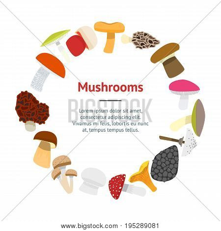 Cartoon Mushrooms Banner Card Circle on a White Flat Design Style Edible and Poisonous Nature Food. Vector illustration