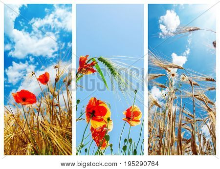 set of pictures with crops and flowers