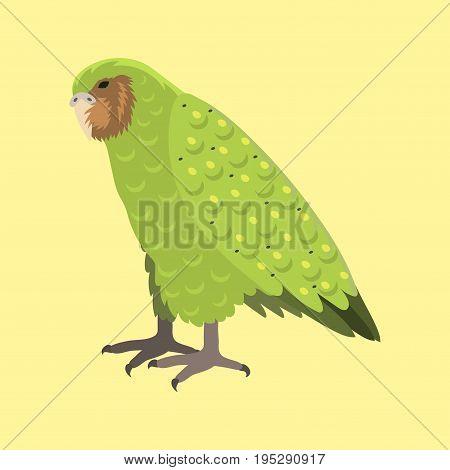 Cartoon tropical kakapo parrot wild animal bird vector illustration wildlife flying cute feather zoo color nature vivid. Perch tropics fly fauna jungle pretty colourful macaw.