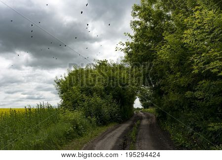 flock of birds crows in the sky with rain clouds above the road among fields and bushes in the countryside