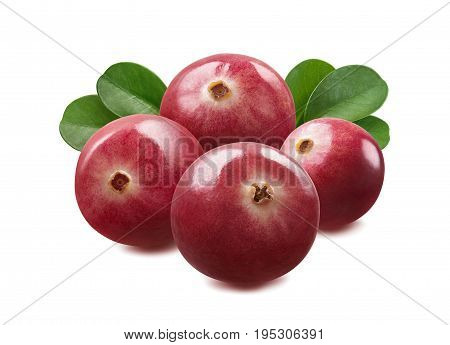 Cranberry group isolated on white background as package design element